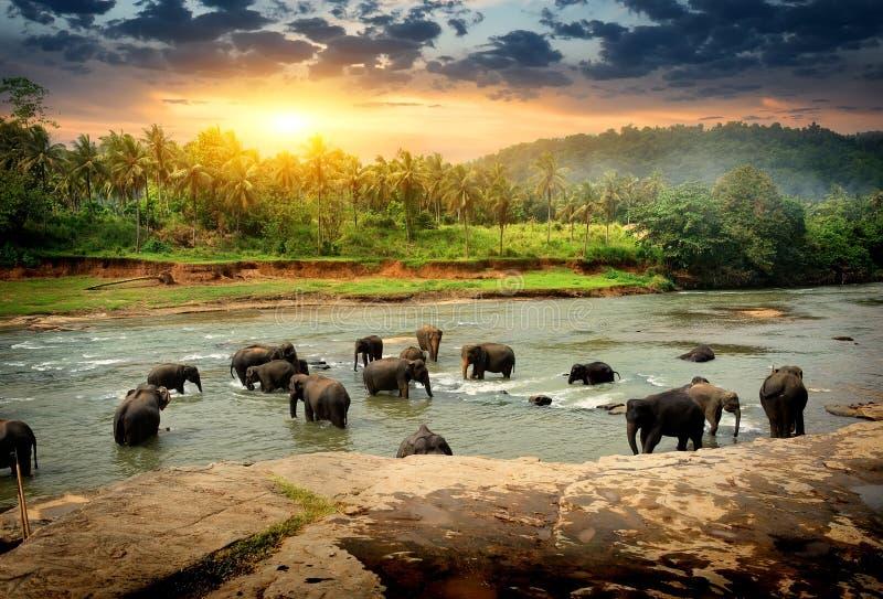 Olifanten in wildernis royalty-vrije stock afbeeldingen