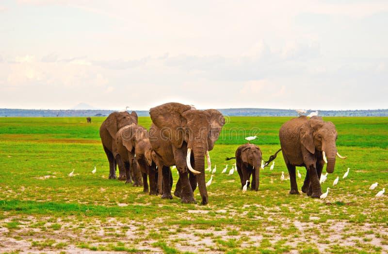Olifantenfamilie op Safari in Amboseli royalty-vrije stock afbeeldingen