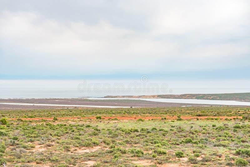 Olifants-Flussmündung lizenzfreie stockfotos