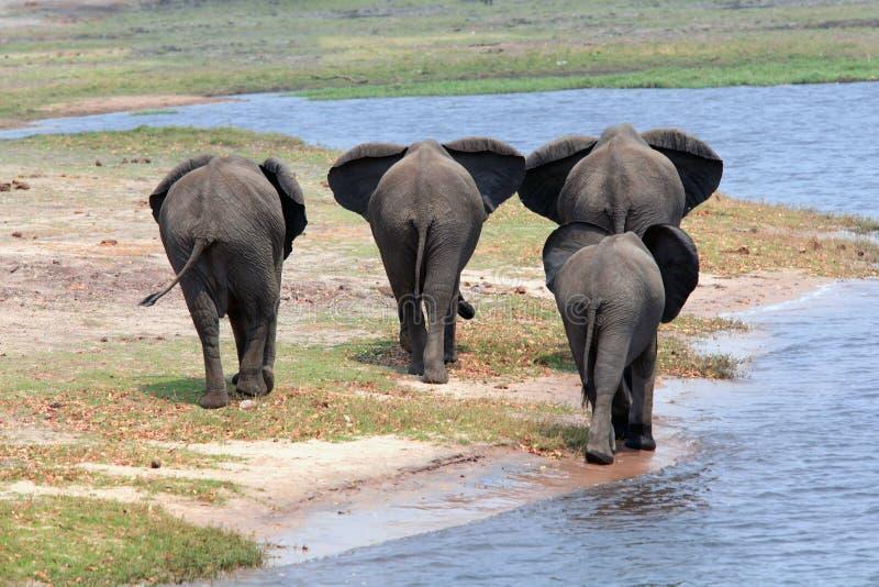 Olifantsfamilie die een waterhole, achtermening verlaten royalty-vrije stock fotografie