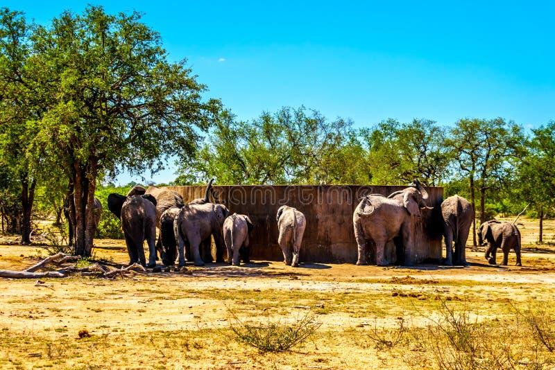 Olifantsfamilie die van de tank van de wateropslag bij Olifants-de bar van Drankgat in het Nationale Park van Kruger proberen te  royalty-vrije stock foto's