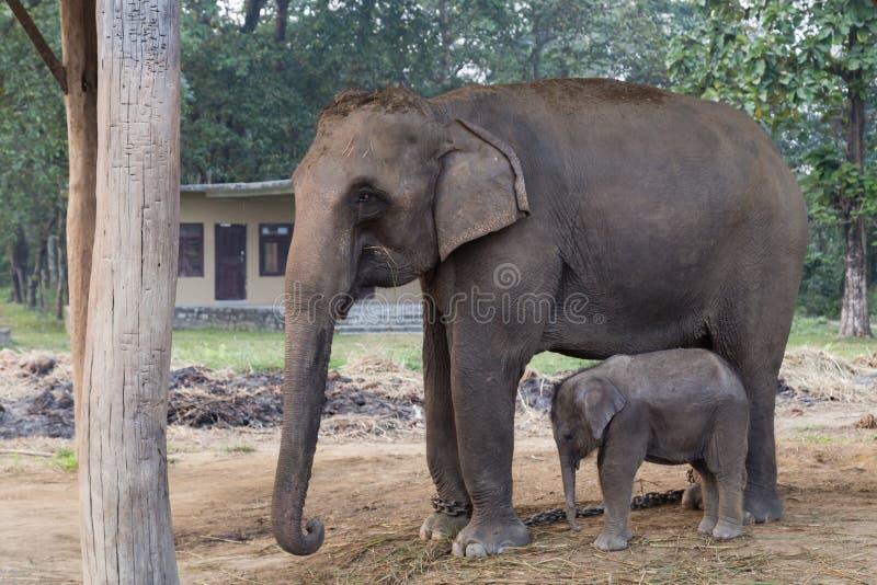 Olifantsmoeder en baby in het Nationale Park van Chitwan, Nepal royalty-vrije stock afbeeldingen
