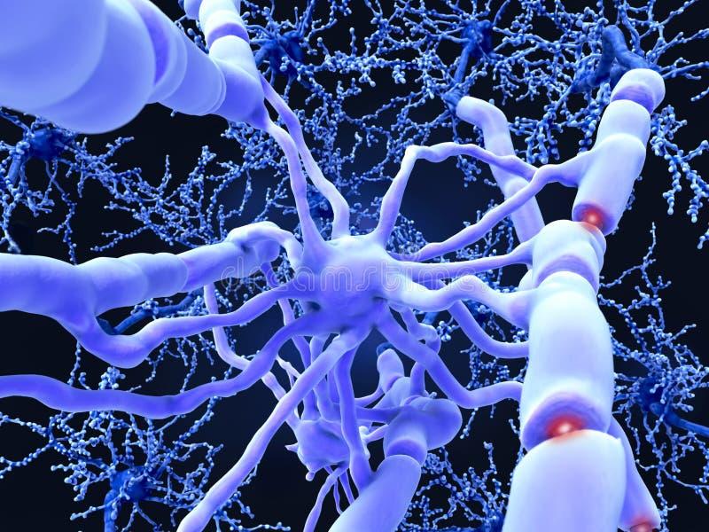 Oligodendrocyte vormt isolerende myelinscheden rond neuronenbijl stock illustratie