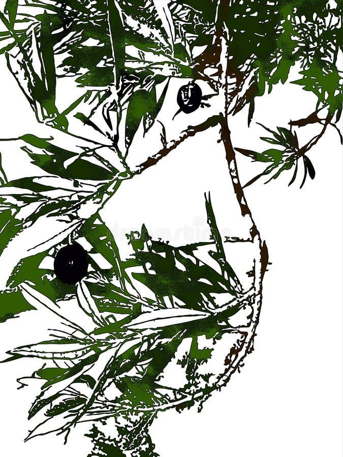 Olijf met het knippen van weg vector illustratie