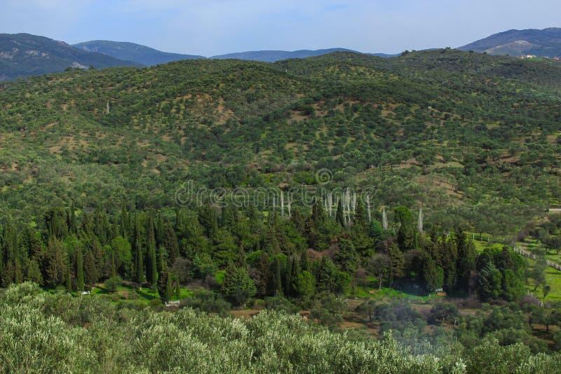 Olijfbomen en bergen royalty-vrije stock afbeeldingen