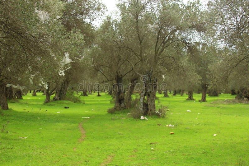 Olijfbomen en groene gazons Menselijk afval stock fotografie