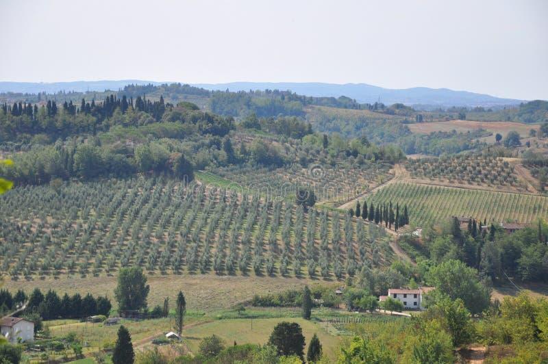 Olijfbomen en heuvels Florence Toscanië stock fotografie