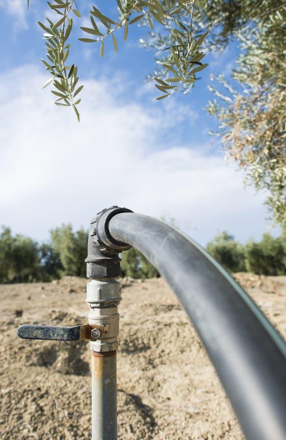 Olijfbomen en irrigatie stock fotografie
