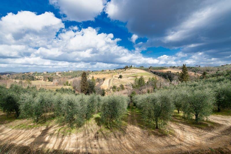 Olijfgaarden en wijngaarden in Chiantivallei in Toscanië Italië royalty-vrije stock foto