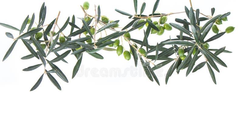 Olijftak met groene die olijven op witte achtergrond worden geïsoleerd royalty-vrije stock fotografie