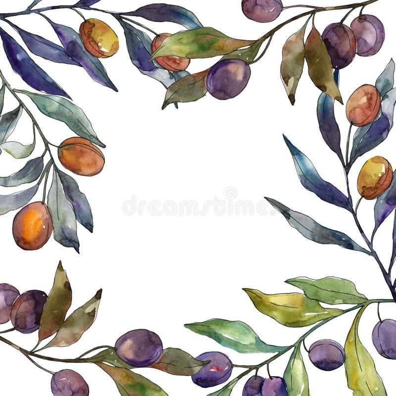 Olijftak met zwart en groen fruit Waterverf achtergrondillustratiereeks Het ornamentvierkant van de kadergrens royalty-vrije illustratie