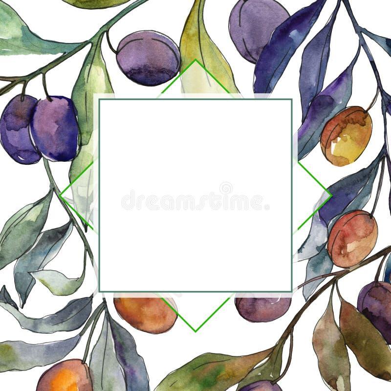 Olijftak met zwart en groen fruit Waterverf achtergrondillustratiereeks Het ornamentvierkant van de kadergrens stock illustratie