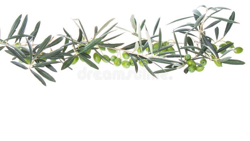 Olijftakken die neer hierboven hangen van Groene olijven met bladeren De ruimte van het exemplaar royalty-vrije stock foto