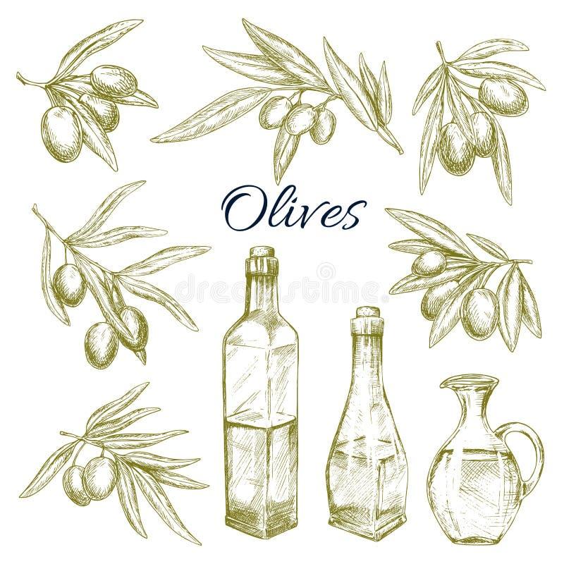 Olijven, de waterkruiken vectorschets van olijfolieflessen royalty-vrije illustratie
