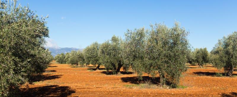 Olijveninstallatie bij landbouwgebied royalty-vrije stock foto