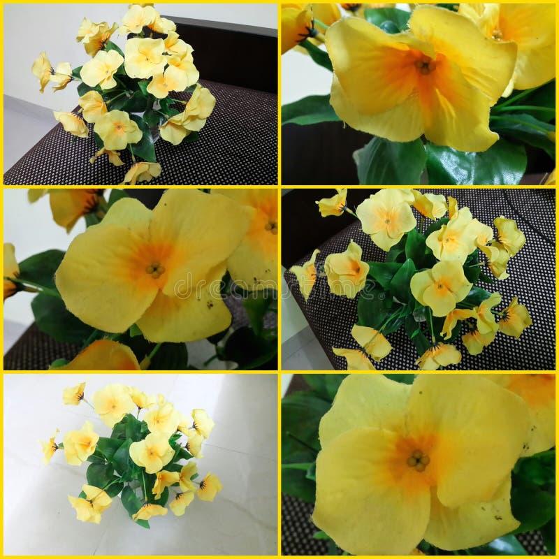 Olik blommaleksak royaltyfria bilder