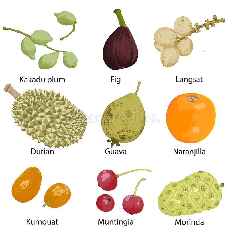 olik frukt b?r fruktt seten f?r orangen f?r grapefruktkiwicitronen vektor illustrationer