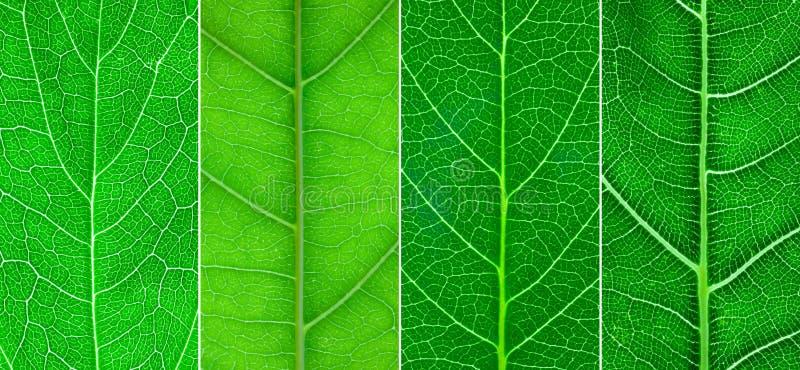 olik grön leaf för close 4 upp royaltyfria foton