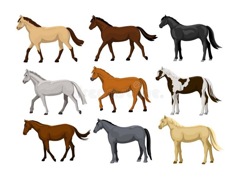 Olik hästuppsättning i typiska lagfärger: svart kastanj, dapple grå färger, dun, skäller, lagar mat med grädde, hjortläder, palom royaltyfri illustrationer