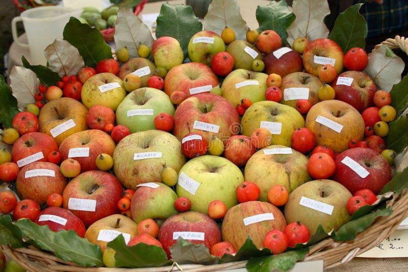 olik kvalitet för äpplen royaltyfria bilder