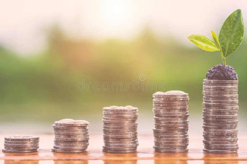 Olik nivå av myntbunten med vattendroppe och växande nolla för träd arkivfoto