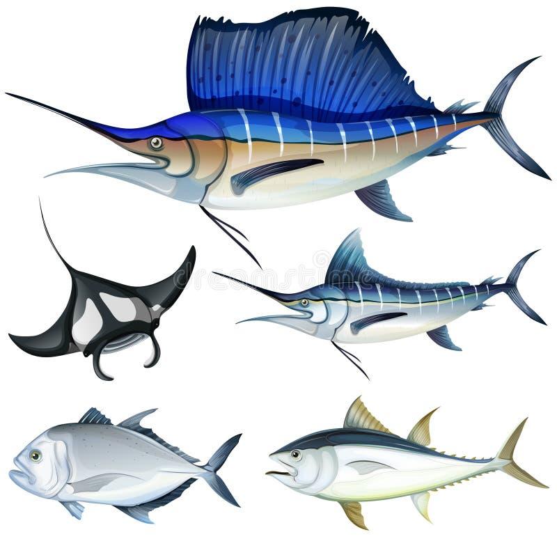 Olik sort av fisken vektor illustrationer