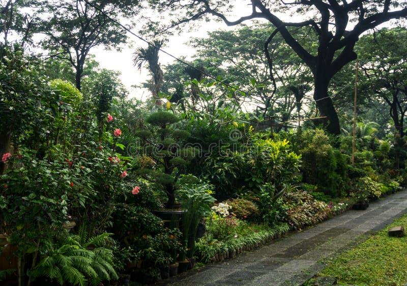 Olik sort av växten och blomman som är ordnade som lite djungel och försäljning vid blomsterhandlarefotoet som tas i Jakarta Indo arkivfoto