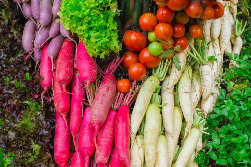 Olik sund färgglad grönsak för bakgrund arkivfoton