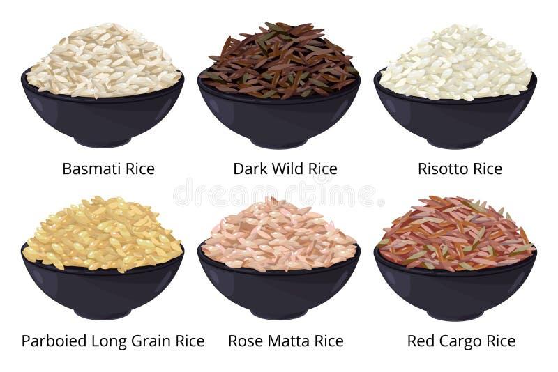 Olik typ av rice Långt korn, brunt, vit och annan Vektorillustrationer i tecknad filmstil royaltyfri illustrationer