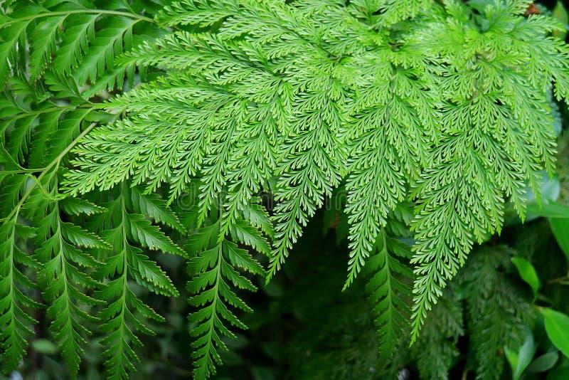 Olik typ för vibrerande gräsplan av ursnygga Fern Plants Leaves i trädgården royaltyfria bilder