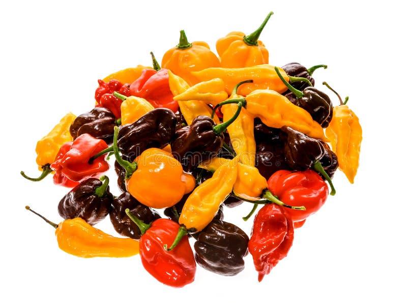 Olik variation av varma peppar eller chilies som isoleras på vit royaltyfria bilder