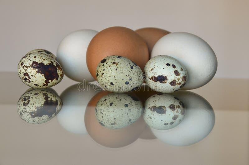 Olika ägg arkivfoto