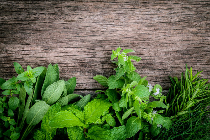 Olika aromatiska örter och kryddor från trädgård gör grön mintkaramellen, fenne royaltyfri fotografi