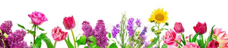 Olika blommor för panorama som isoleras på vit royaltyfri fotografi