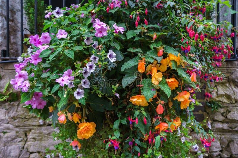 Olika blommor i hängande korgar på stenväggen royaltyfri foto