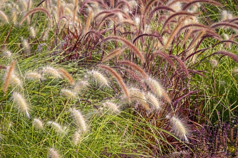Olika dekorativa gräs arkivbilder