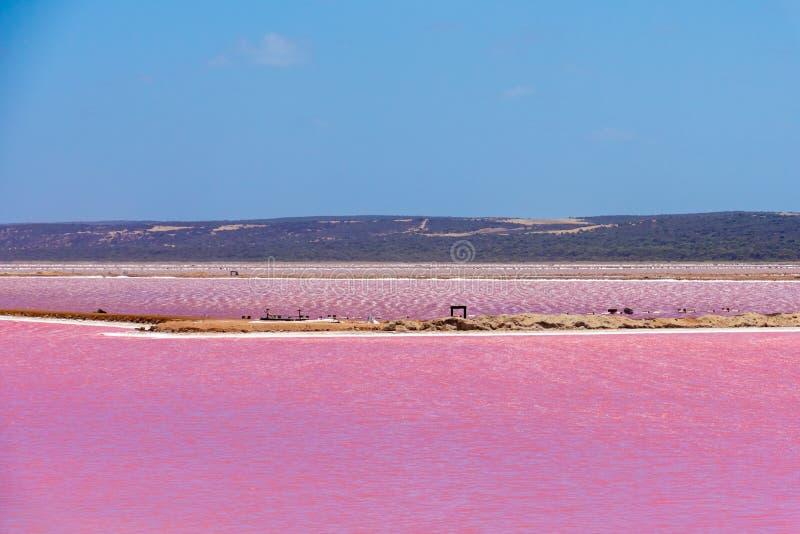 Olika delar av den rosa sj?n bredvid Gregory i v?stra Australien royaltyfri foto