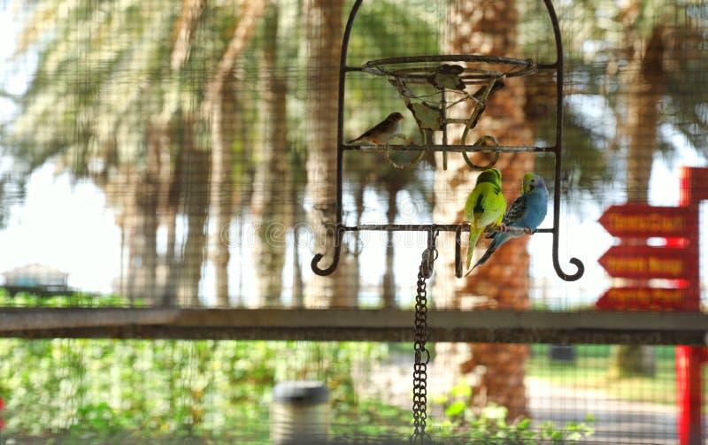 Olika exotiska fåglar i den utomhus- aviariet, sikt till och med spisgallret arkivfoto