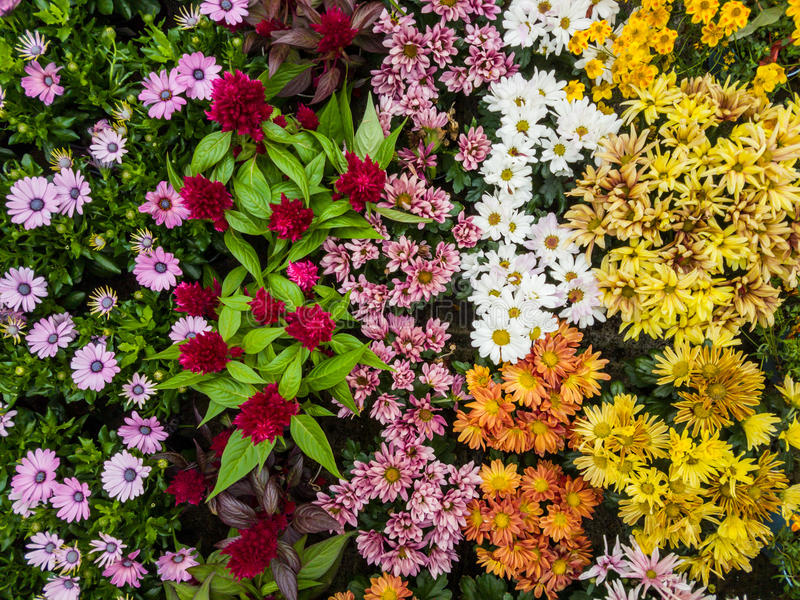 olika färgrika blommor royaltyfri bild