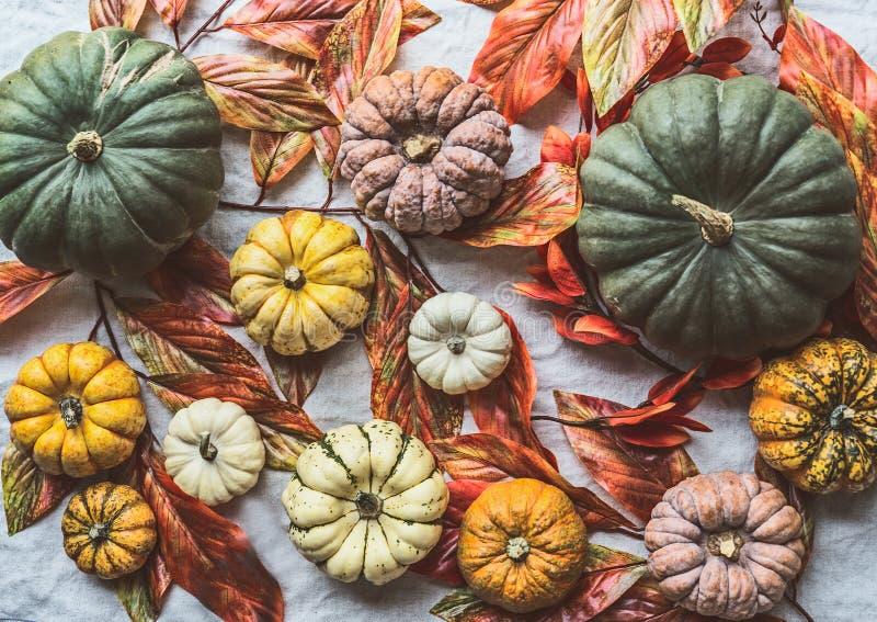 Olika färgrika organiska lantgårdpumpor med höstsidor, den bästa sikten, lägenhet lägger Nedgångskörd royaltyfria bilder