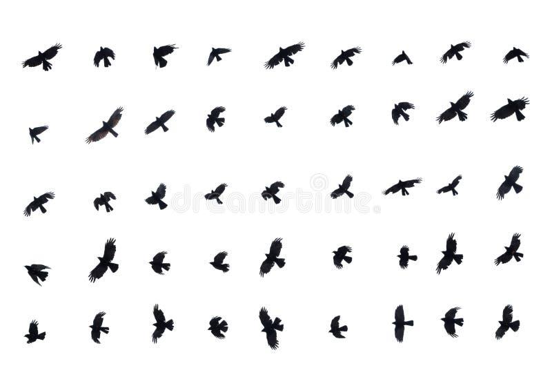 Olika fåglar i flykten på vit bakgrund stock illustrationer