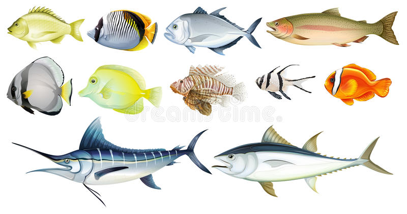 Olika fiskar vektor illustrationer