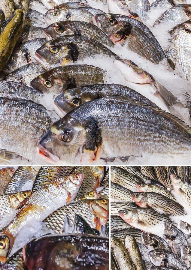 Olika fiskar som lagras på is royaltyfria bilder