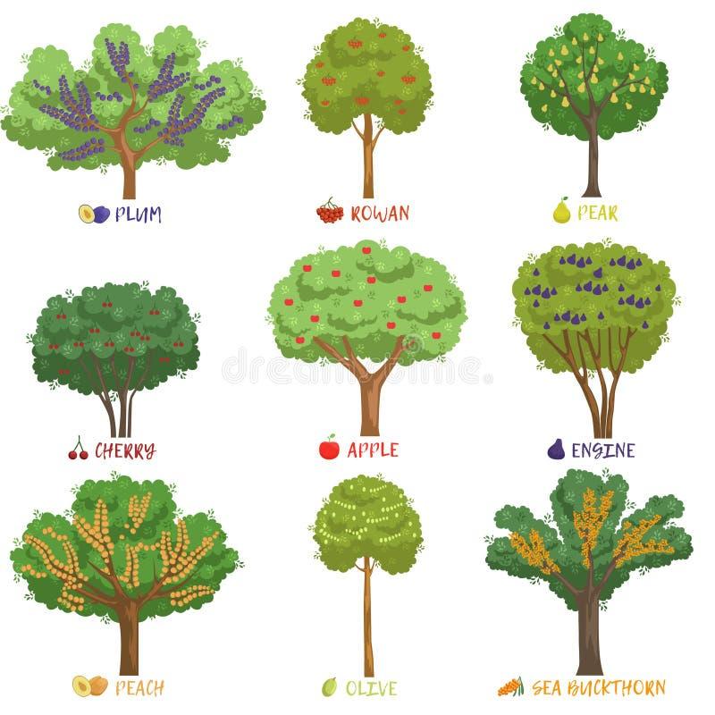 Olika fruktträdslag med namn ställde in, trädgårds- träd och illustrationer för bärbuskevektor vektor illustrationer