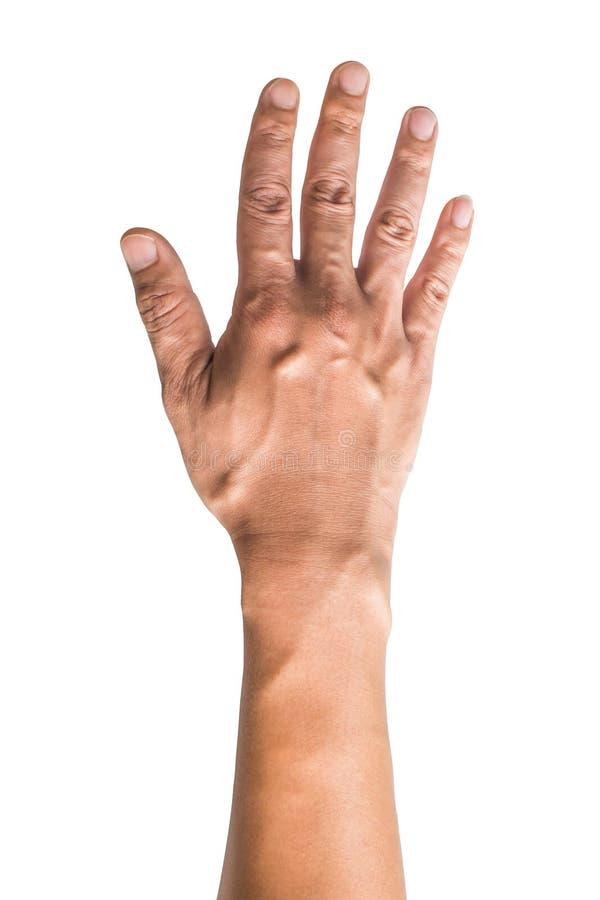 Olika gester och tecken av mans hand som isoleras p? vit bakgrund med urklippbanan royaltyfria bilder