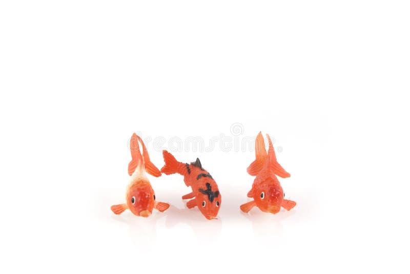 olika guldfiskar tre royaltyfri fotografi