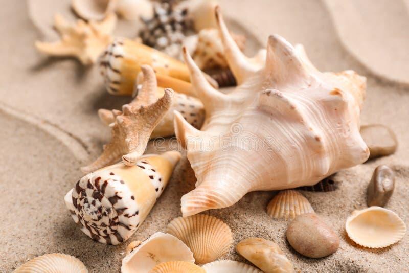 Olika havsskal på sand royaltyfria foton