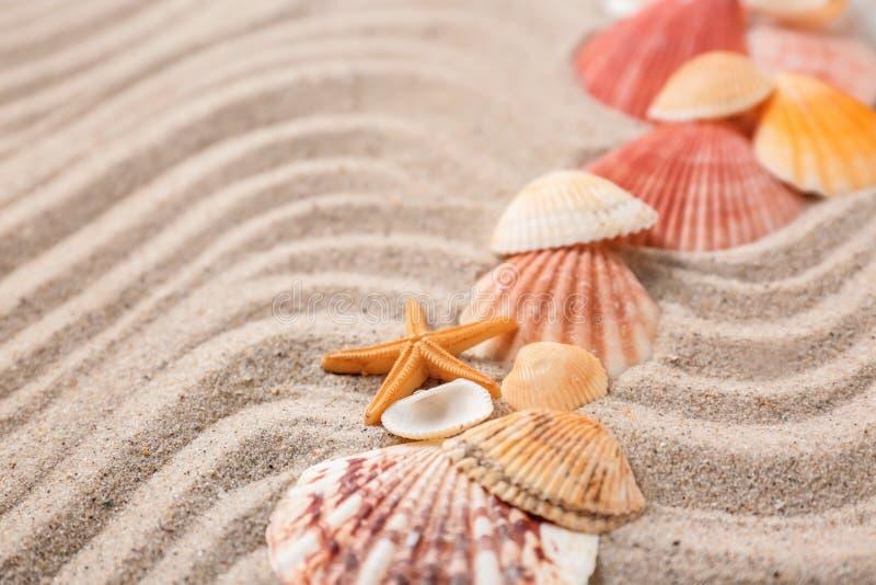 Olika havsskal på sand fotografering för bildbyråer