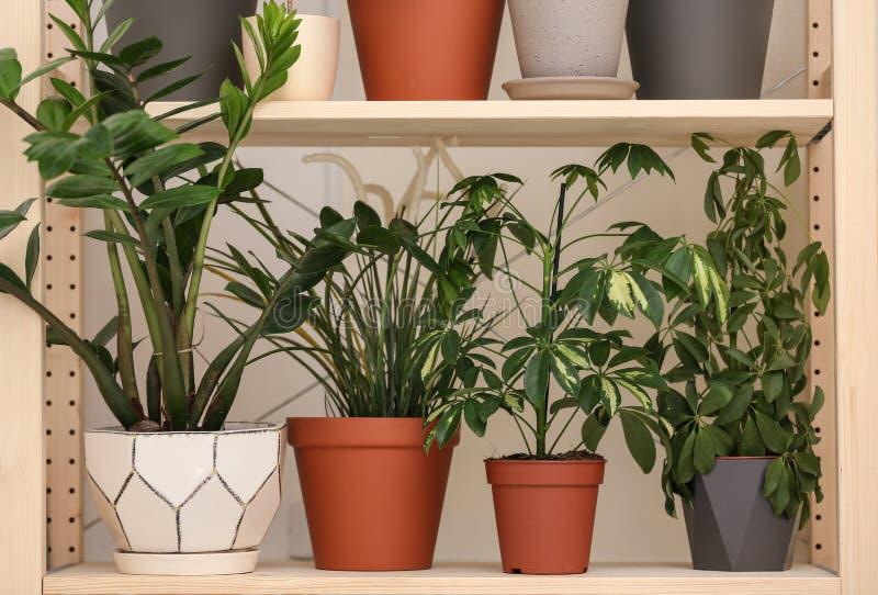 Olika hem- växter på hylla nära väggen royaltyfri bild