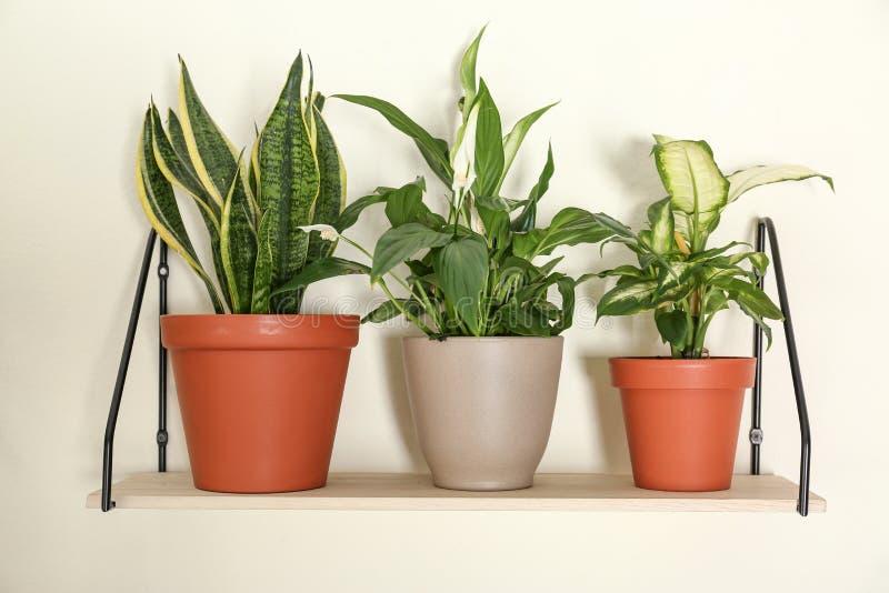 Olika hem- växter på hylla nära väggen arkivfoto